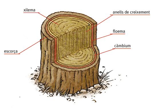 1. El funcionament de l'arbre